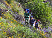 Three people hiking up a hill with wildflowers.