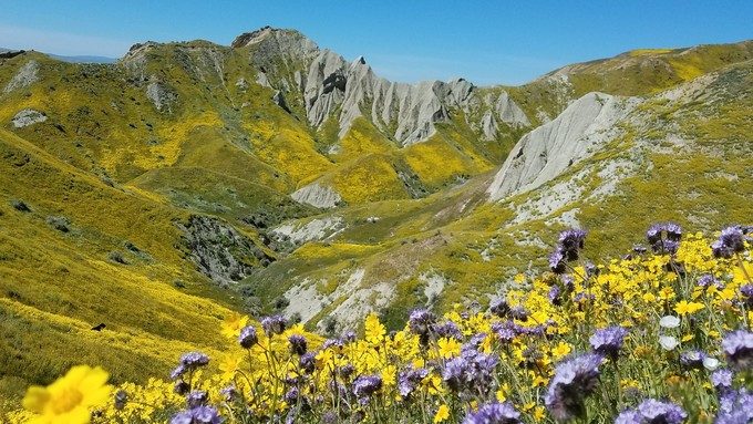 Large mountain with with yellow wildflowers.