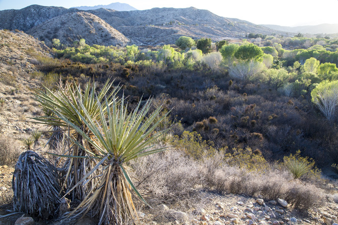 Desert hillsides with brush and Yucca plants.