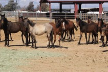 Horses standing in a corral.