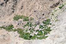 Rocky hillside with plants growing in a pattern.
