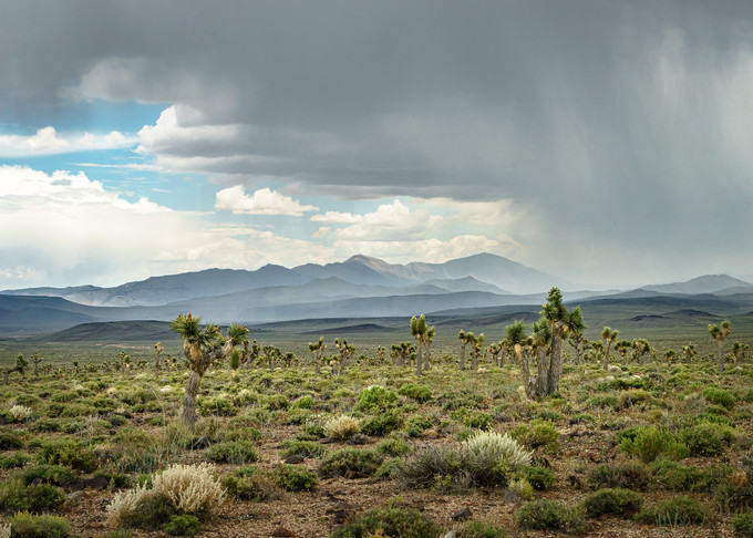Cactus on a landscape with small brush covering the ground, mountains in the background, and rain coming down on the right side of the photo.