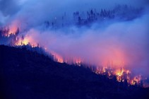 Glow from wildfire seen between trees on a hillside.