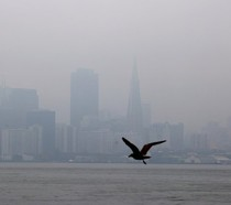 A smokey San Francisco skyline with the silhouette of a bird flying by.
