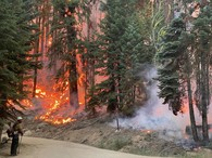 a firefighter stands on the side of a road as a fire burns in a forest across the street.