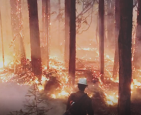 Fire burning in a forest.