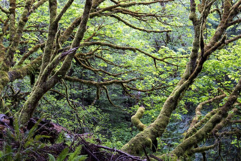 A mossy forest dense with foliage.