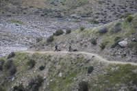 Two hikers and their dogs on a trail.