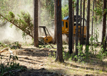 Heavy equipment in a forest.