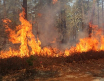 Wildfire burning in a forest.
