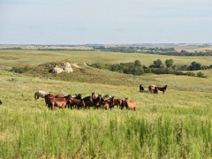 Horses standing in a green field.