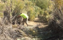 A man working in tall brush clearing a trail.