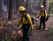 Firefighters lighting a controlled burn in a forest.