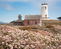 A lighthouse and brick building in a field of flowers.