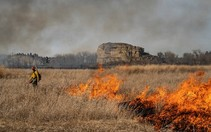 A firefighter standing in a field of dry grasses while igniting a prescribed fire.