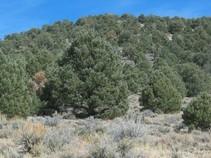 Trees on a hillside.
