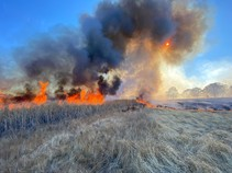 Fire burning in tall, dry grasses.