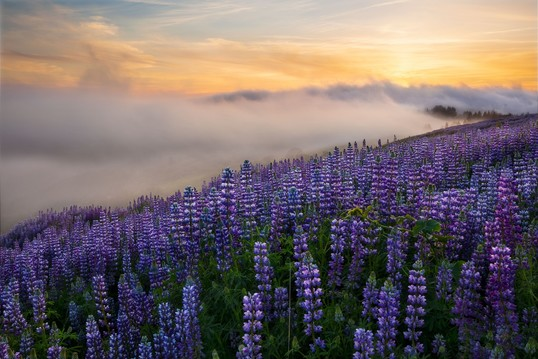 Purple flowers spring up from the top of a high hillside as the sun sets through the clouds below