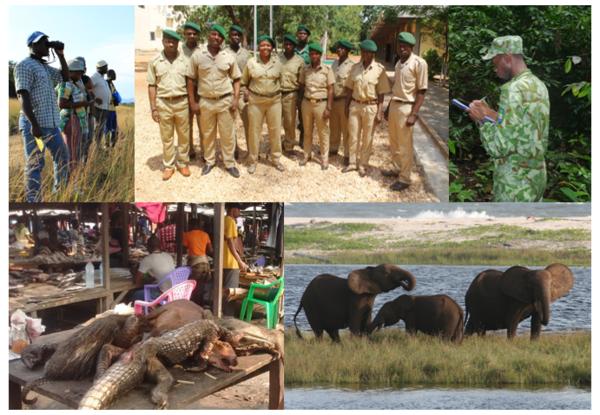 USFWS Central Africa Regional Program