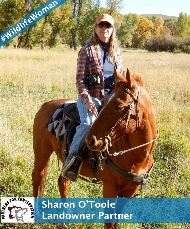 Sharon O'Toole