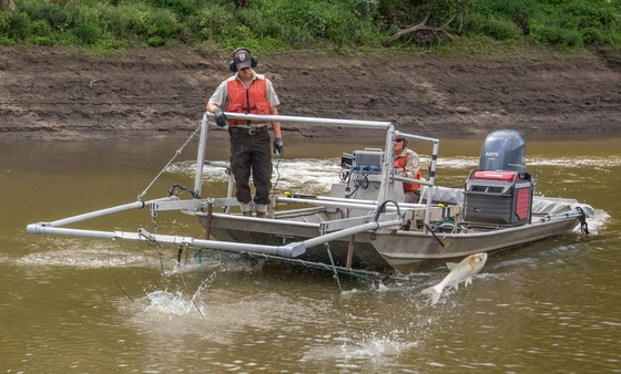 Columbia FWCO staff employ assessment tool for Asian Carp