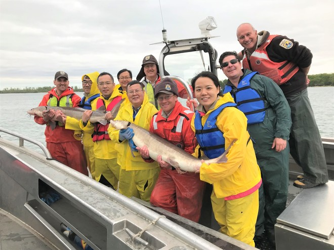 chines biologist FWS biologist holding lake sturgeon captured from Detroit River, Michigan