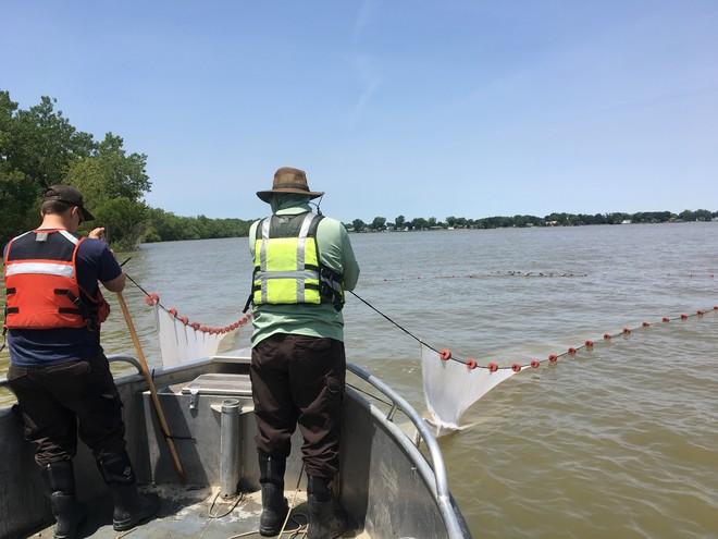 two biologists in a boat pulling in siene