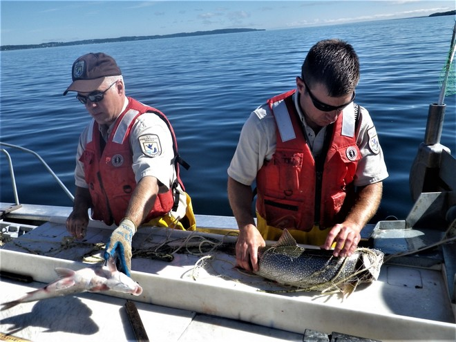 removing fish on gillnet table
