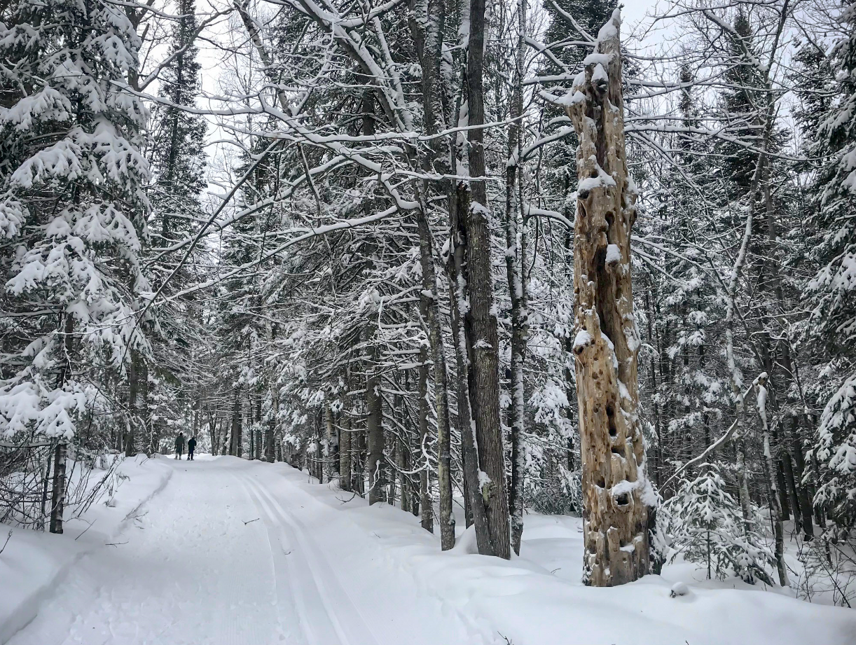 cross country skiers on trail at NFH