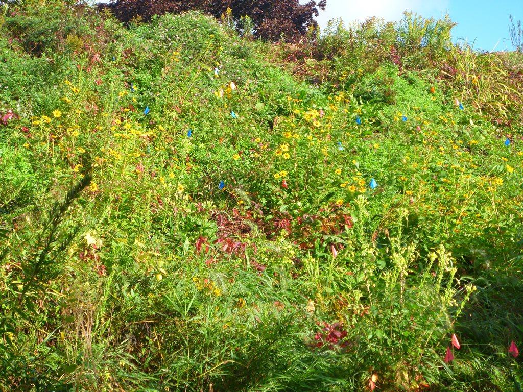 after planting pollinator plants