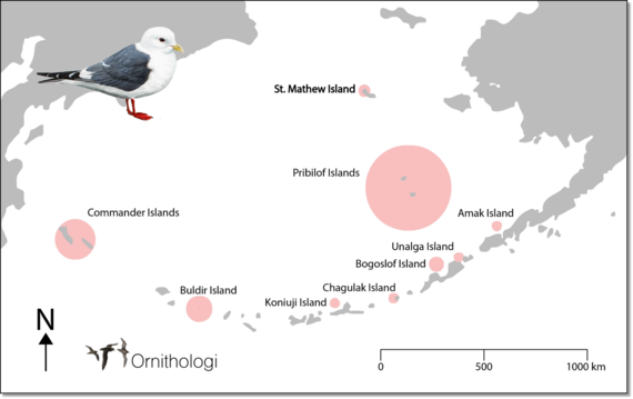 Map of Red-legged Kittiwake breeding range.
