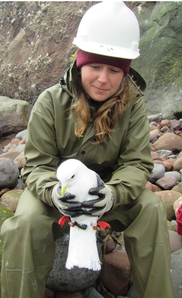 Biologist McKenzie Mudge holds banded Red-legged Kittiwake