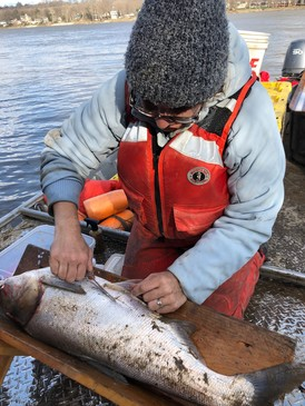 Carterville FWCO staff member tag an Asian carp