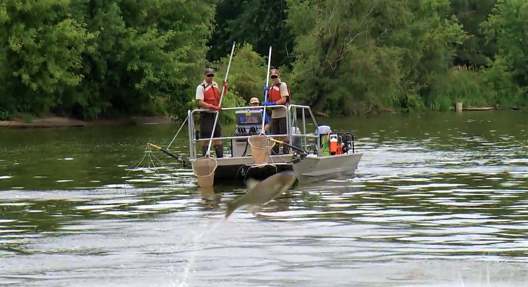 shocker boat for asian carp edit