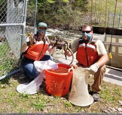 USGS staff work the sea lamprey traps on the Oceoqoc R, MI