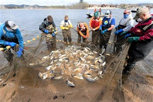 various fish captured in a large seine net with people surrounding it
