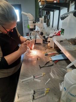 Megan Bradley works on glochidia from mussels