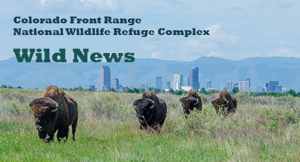 Wild News Banner Alt2d
