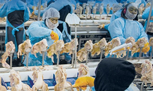 poorly-run medical units at poultry plants can be a factor in under-recording of injuries