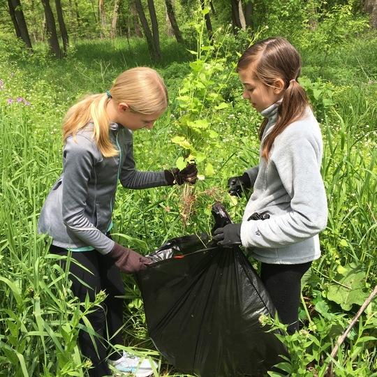 Kromrey Invasive Species Removal