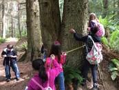 Oak Harbor tree measuring