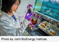 Harnessing Biotechnology to Accelerate Advanced Biofuels Production. Photo by Joint BioEnergy Institute.