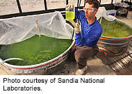 Algal growth tanks. Photo by Sandia National Laboratory.