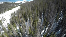 Pine Beetle-Killed Forests