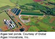 Global Algae Innovation Test Ponds