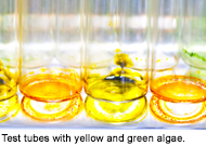 Test tubes with yellow and green algae.