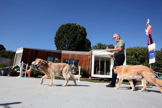 photo of a man walking two golden retrievers at an event