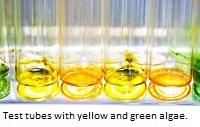 Algae test tubes