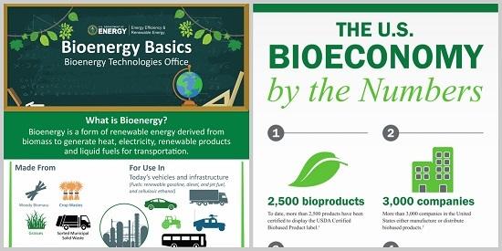 Bioenergy infographics