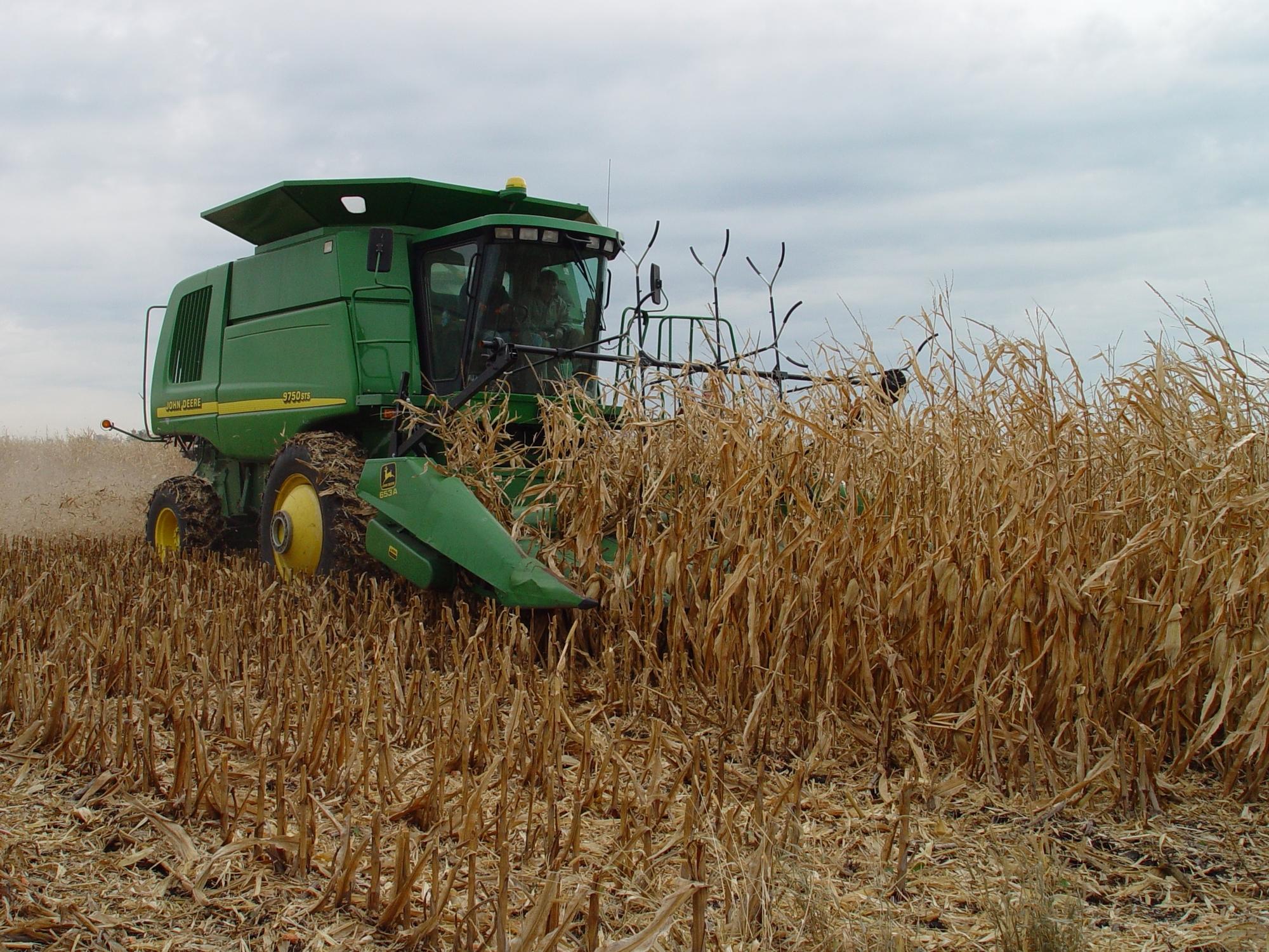 Corn stover